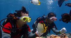(D3)大サンゴ体験ダイビングコース